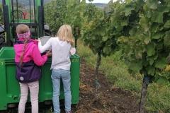 Lehrausgang zum Weingut Taufratzhofer